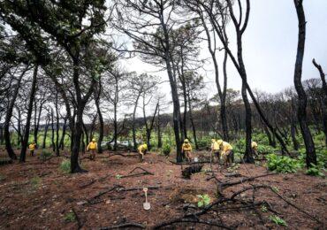 Reforestan Brigadas del OPD Bosque La Primavera zonas afectadas