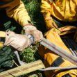 Capacitan bajo estándares de Canadá a combatientes forestales de Semadet y JIMA